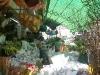 Hongkong - Blumenmarkt