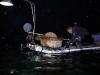 Kormoranfischer